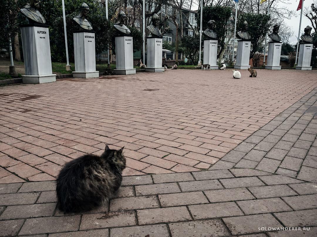 Парк мачка Стамбул Турция